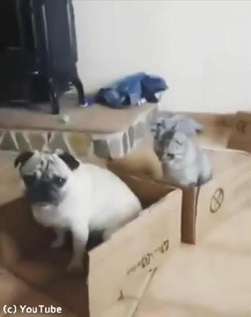 猫の言うことは絶対04