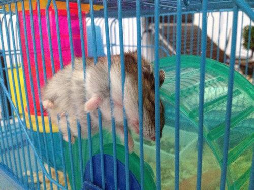 07スヤスヤぐっすり寝る動物たち