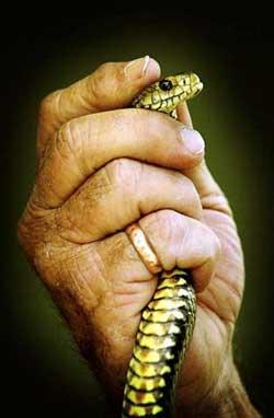 旅行先で毒蛇に大事なところを噛まれる01