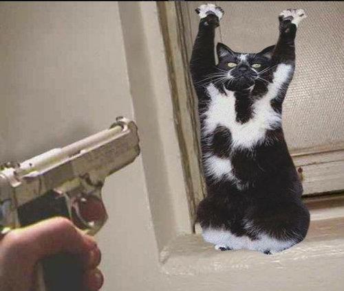 ばんざい猫12