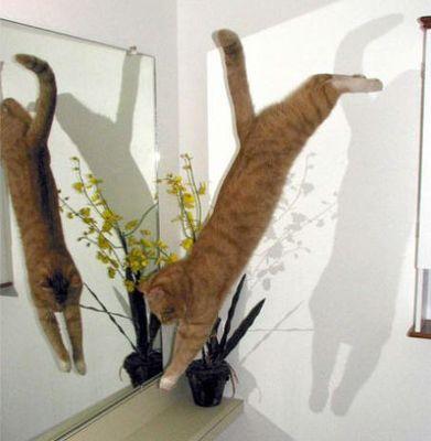 猫ジャンプ04