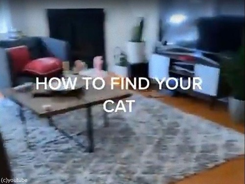 うちの猫の見つけ方00