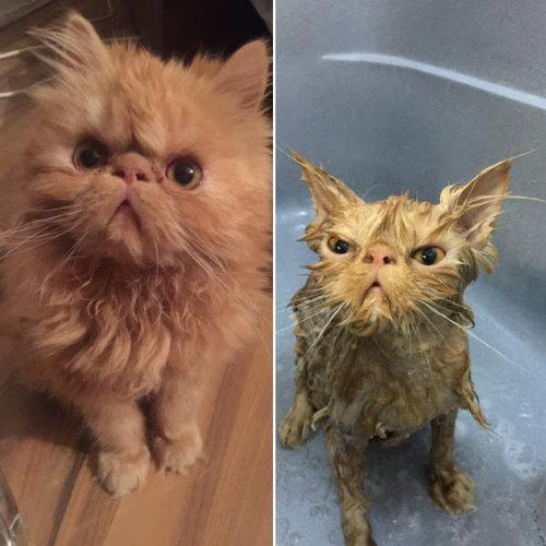 入浴前と後のペットのビフォー・アフター03