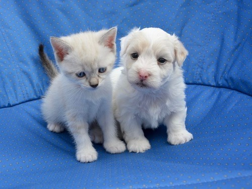 イギリスのペットショップで子犬と子猫の販売禁止01