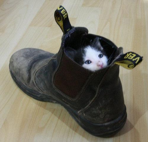 08かくれんぼする猫たち