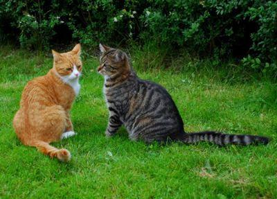 壮絶なる2匹の猫01