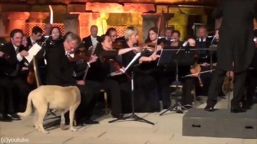 オーケストラ演奏中に犬が入ってきた02
