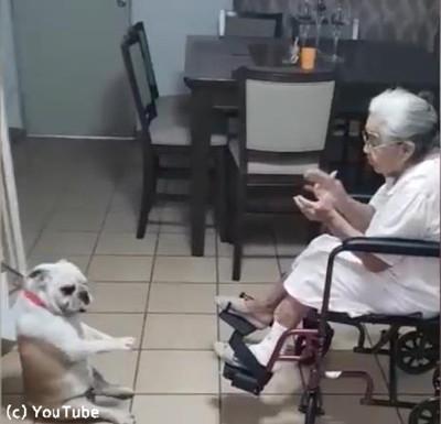 おばあちゃんの歌に合わせてダンスするわんこ03