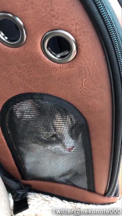病院に連れていかれる猫01