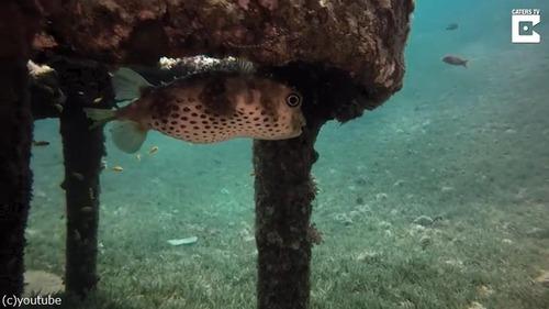 ダイバーが海底でロバの彫刻を発見03