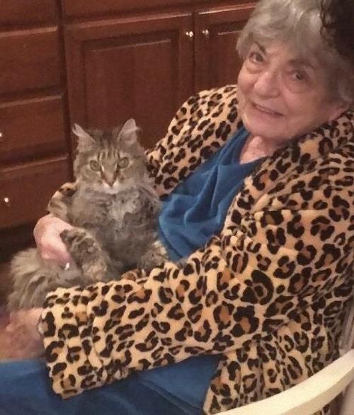 祖父がすっかり猫好きに02
