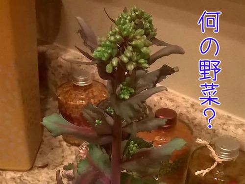 発芽した野菜や果物00