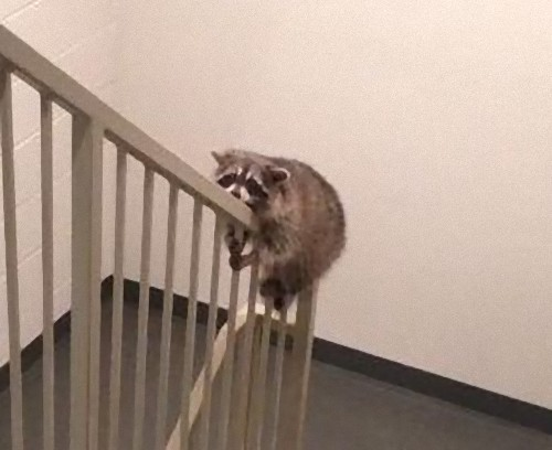 階段で目が離せない03