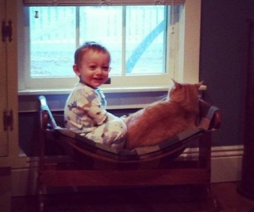 赤ちゃんの育ての親は猫02