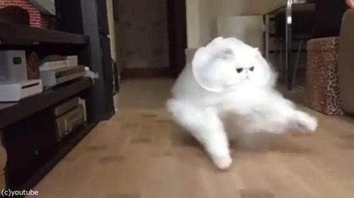 綿毛のような猫04