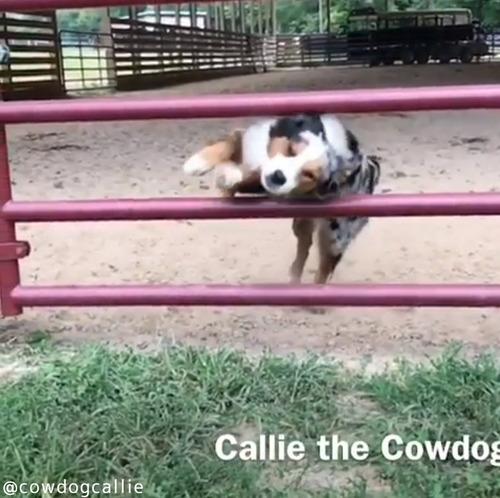 柵の飛び越え方がカッコよすぎる犬03