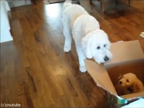 「犬の誕生日に、子犬をプレゼントした…」01