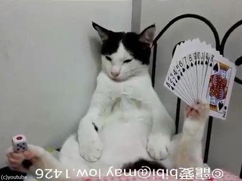 足にサイコロを積み上げる猫01