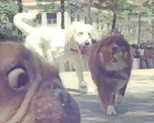 マンガみたいな表情の犬02