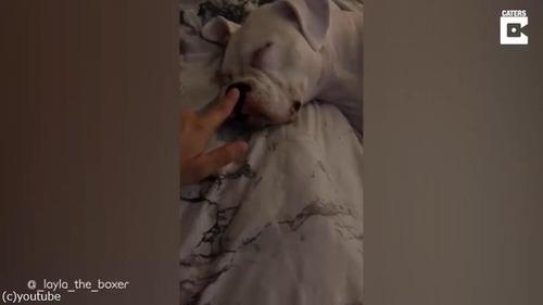 犬が寝ている間にスナック菓子を食べようとしたら…02