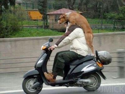 自転車やバイクに乗る犬たち03