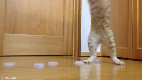 猫ゴールキーパー06