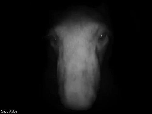 夜中にピンポン…クマだった!04