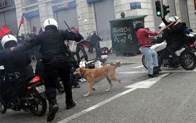 ギリシャの暴動犬13