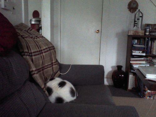 サッカーボールの猫01