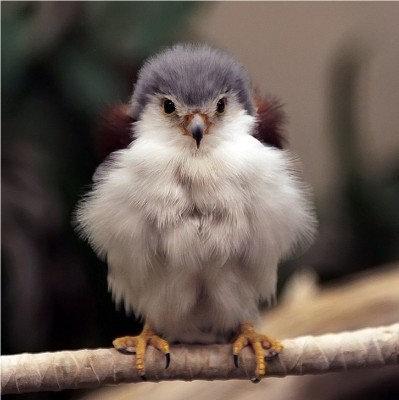 15動物の赤ちゃんたち・Baby falcon