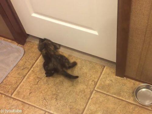 子猫がドアの下を通り抜ける03