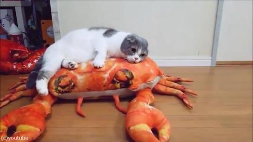 後ろ足のない猫の移動方法が斬新03
