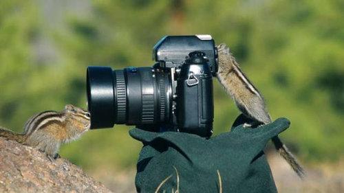 カメラマンな動物06