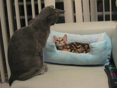 猫の場所取り08