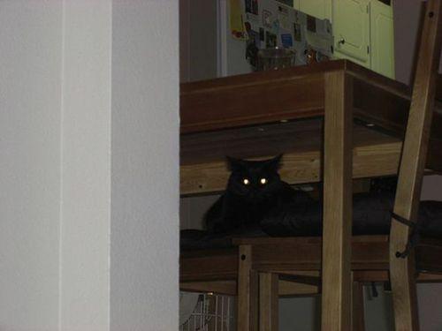 猫は見ている10