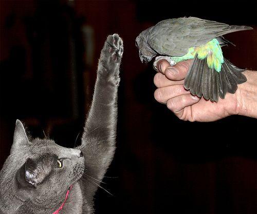 インコと猫06