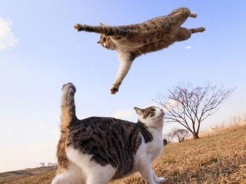 現実をくつがえしている猫10