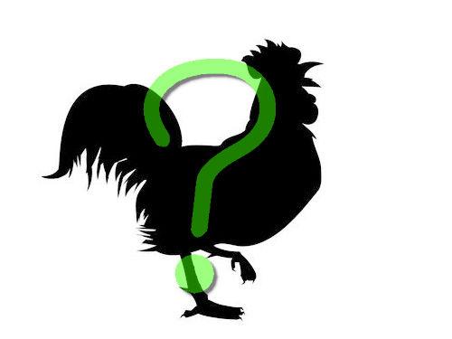 インドネシアの黒いニワトリ00