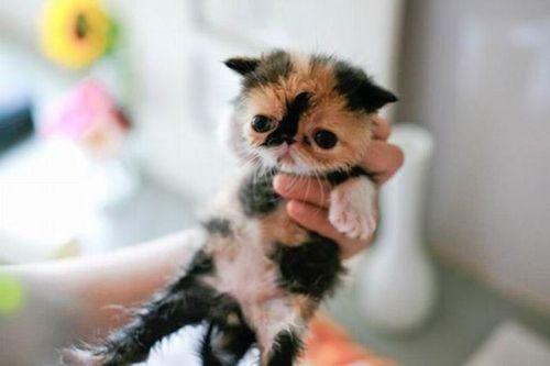 ぶさかわいい猫14