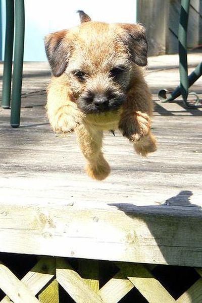 猫が飛ぶ、犬も飛ぶ、人も飛んで飛びまくりな画像03