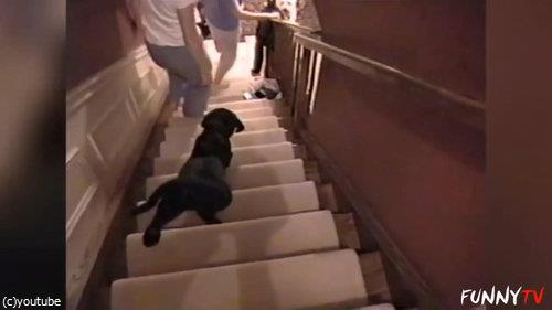 階段に苦労する子犬たち04