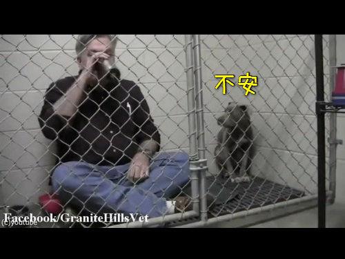 獣医がケージの中で犬と食事00