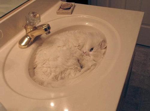 猫は液体説13