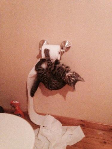 なぜ猫はえらいのか10