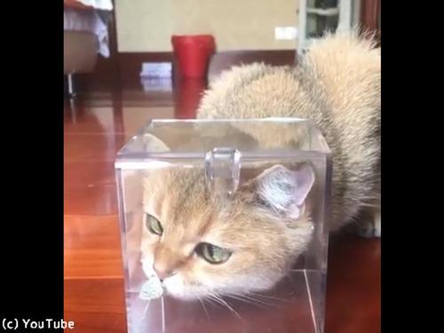 お鼻に蝶々がとまって困惑する猫00