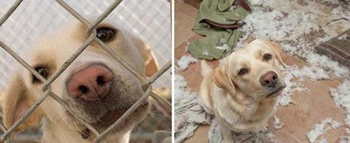 拾われた犬のビフォー&アフター15