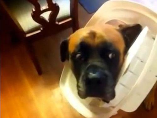 犬に「ゴミ箱を散らかしたのは誰」01