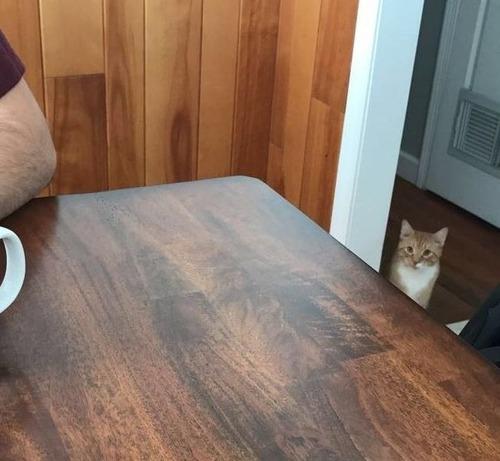 猫が見つめてくる03
