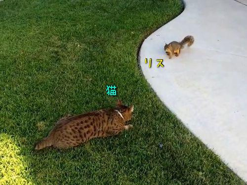 猫とリスのにらみあい00