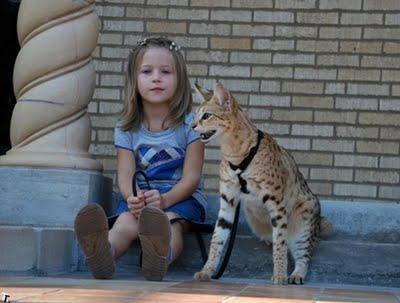 世界一背の高い猫02